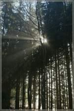 Sonstiges/173925/wenn-man-vor-lauter-baeumen-die Wenn man vor lauter Bäumen die Sonne kaum sieht... im Wald bei Les Pleiades, 31.01.2011